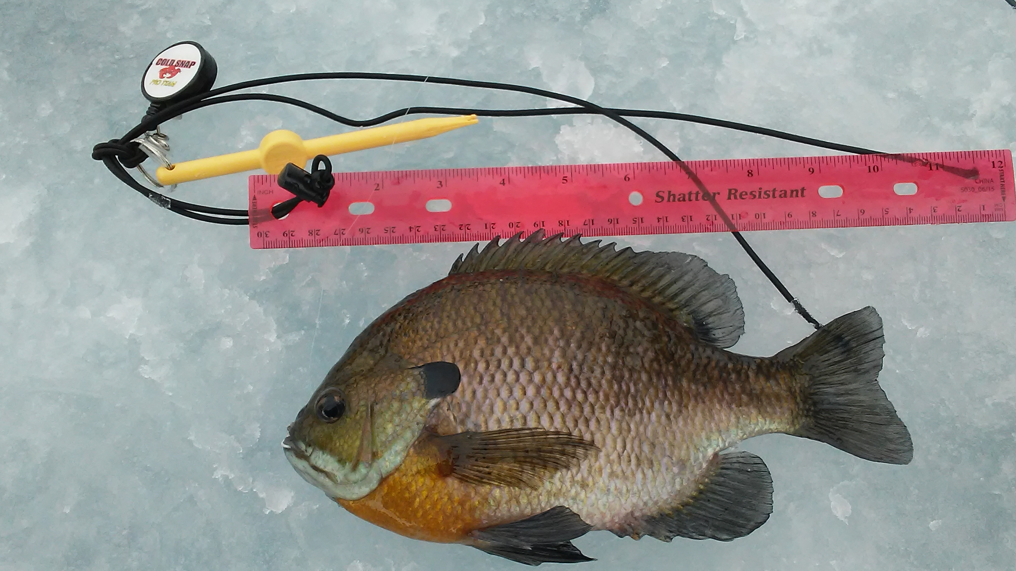 Panfish pics page 10 crappies sunfish outdoor for Best fishing times for today