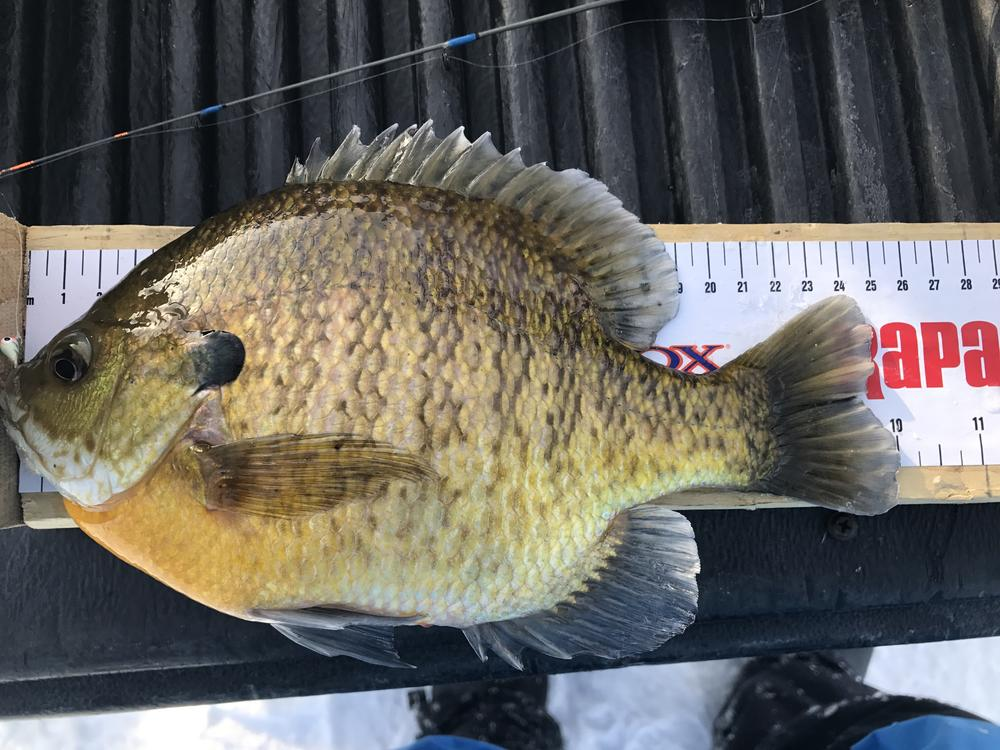 sunfish1.jpg