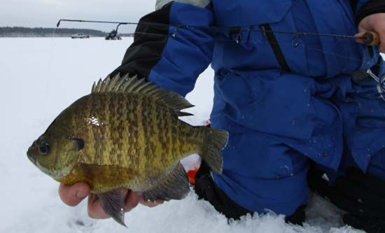 Information about ice fishing for South dakota ice fishing