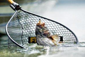 Get the Net!